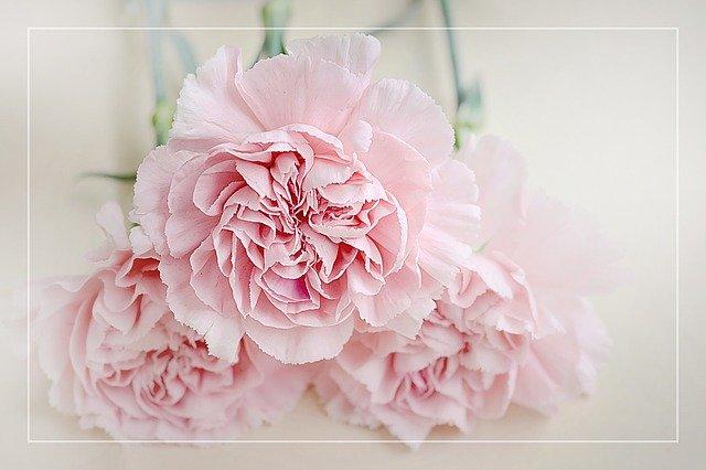 母の日ギフトはお花をあげよう♡人気の定番ギフトからちょっと変わったオススメ品も!